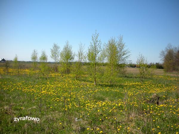 wiosna 2012_57
