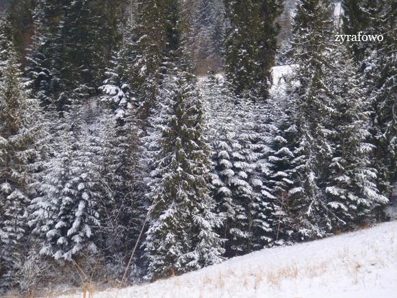 zima_11