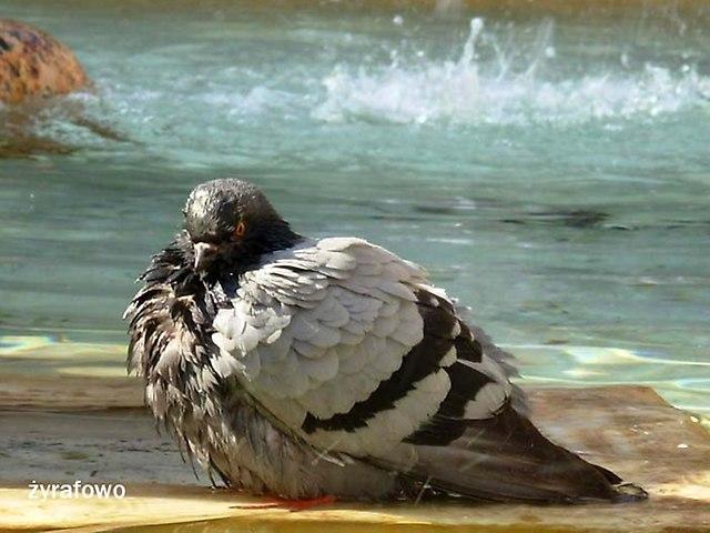 ptaki_50