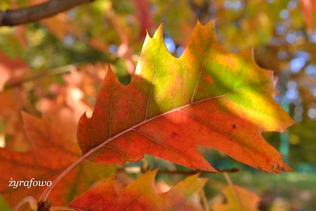 jesien 2012_68