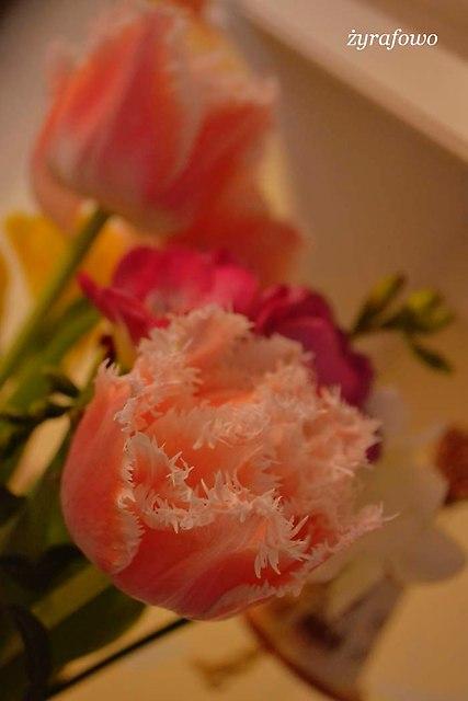 kwiaty 2014_12