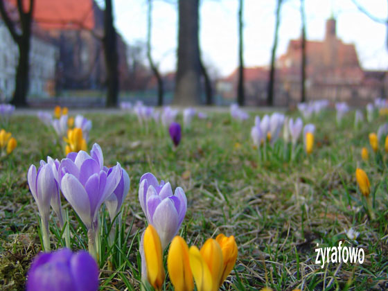 wiosna 2011_05