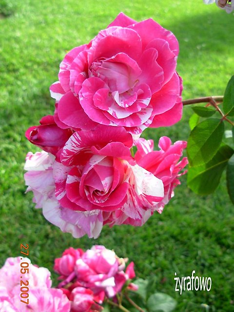 kwiaty_05