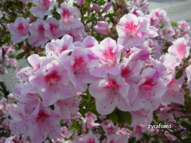 kwiaty_26