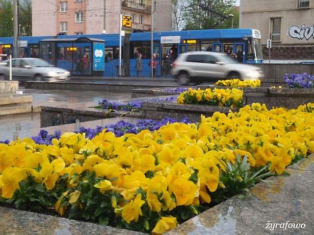 wiosna 2014_82