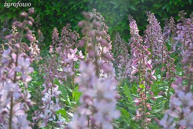 Ogrod Botaniczny_06