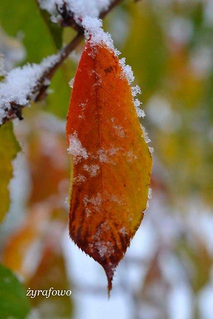 jesien 2012_180