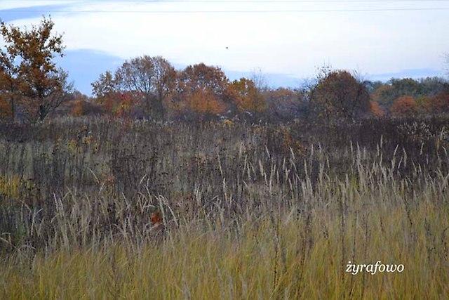 jesien 2012_230