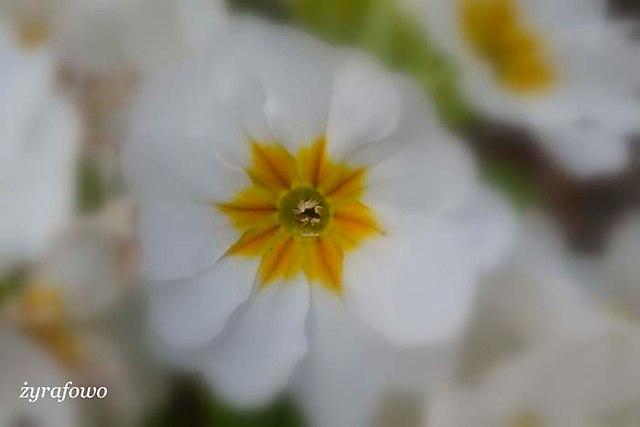 wiosna 2014_72