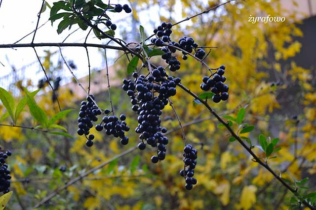 jesien 2012_243