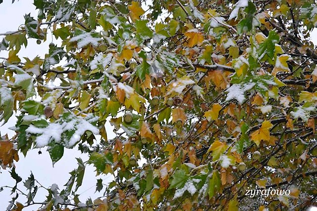 jesien 2012_115