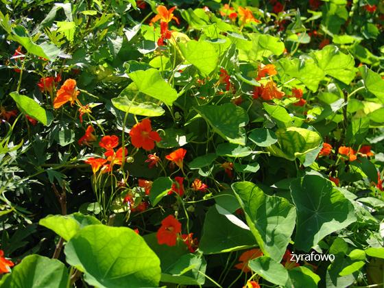 Ogrod Botaniczny 2011.08_01