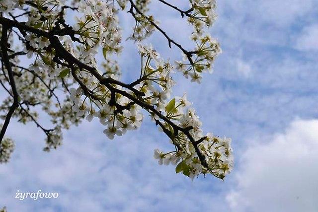Wielkanoc 2014_69