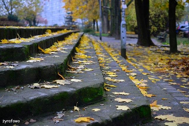 jesien 2014_22