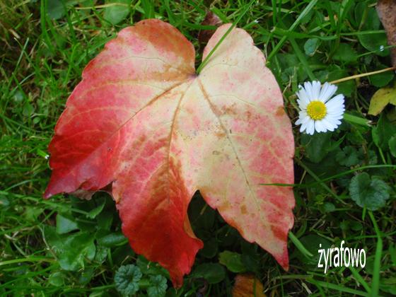 jesien 2011_47