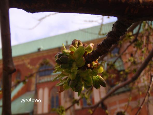 wiosna 2012_35