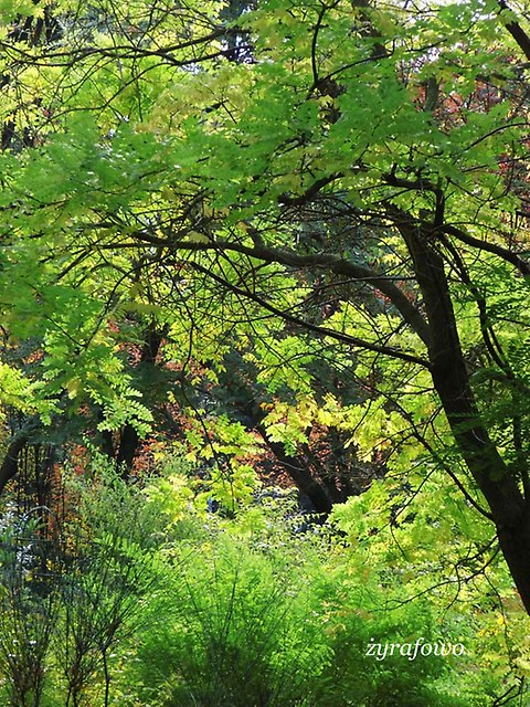 Ogrod Botaniczny 2012_01
