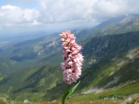 Tatry 2009 05