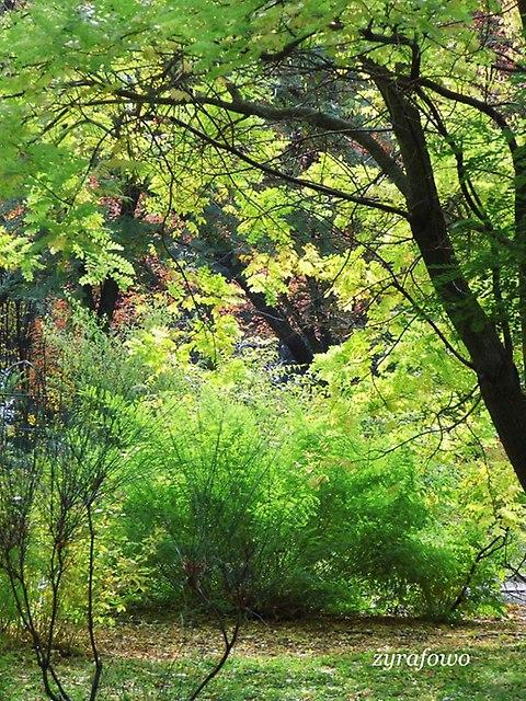 Ogrod Botaniczny 2012_03