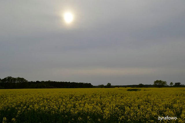 wiosna 2015_37