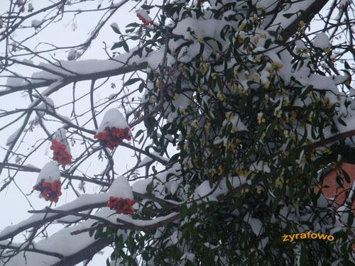zima 2010_32