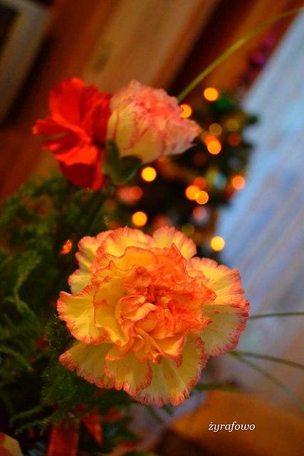 Boze Narodzenie 2013_31