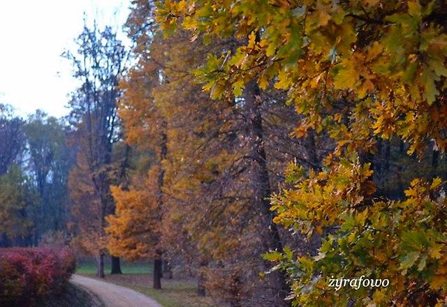 jesien 2012_227
