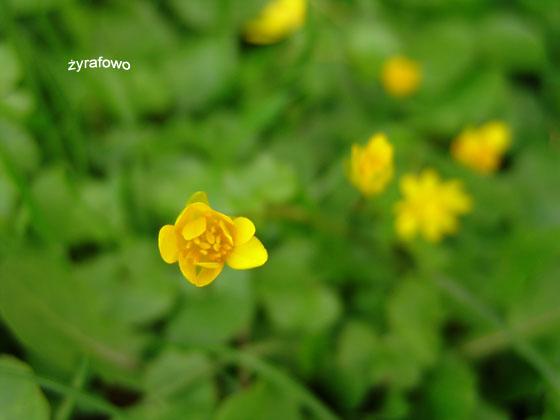 wiosna 2011_49