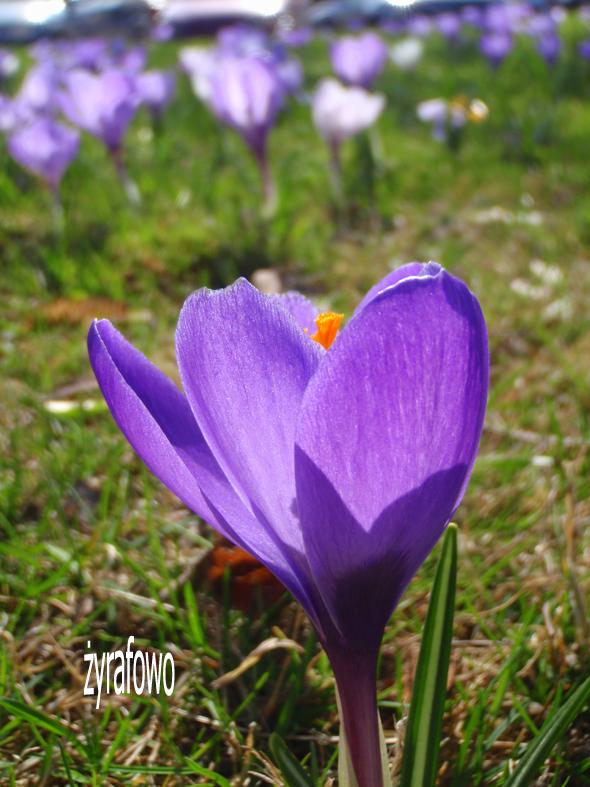 wiosna 2012_15