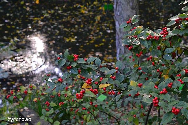 Ogrod Botaniczny 2014_42