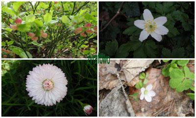 wiosna 01