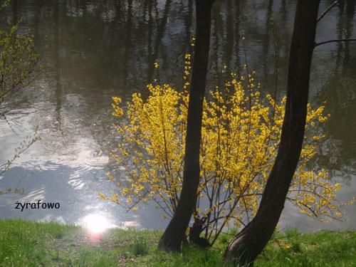 wiosna 2010_08