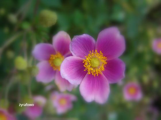 Ogrod Botaniczny 2011.08_22