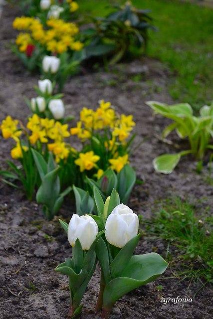 wiosna 2014_217