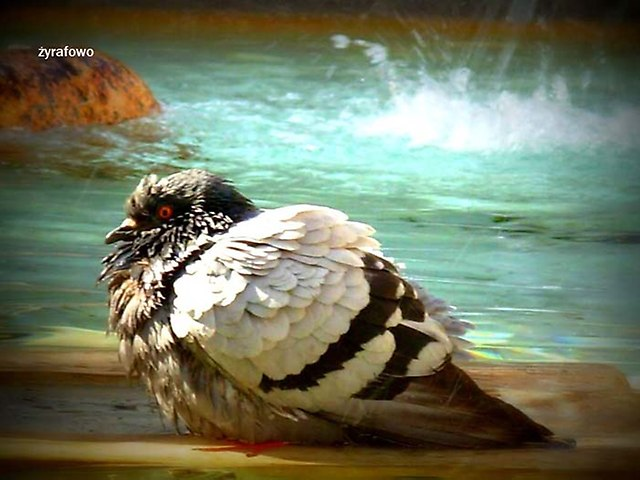 ptaki_46
