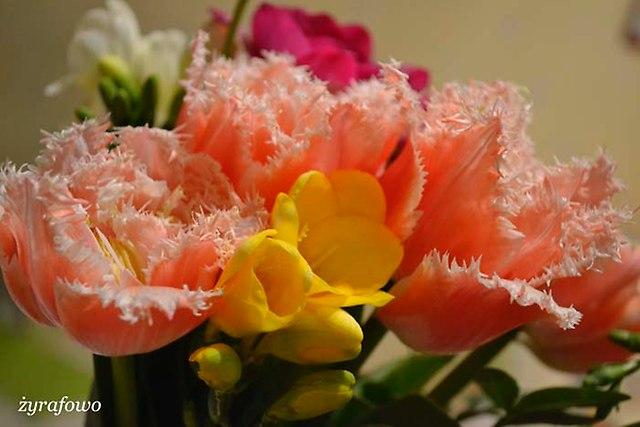 kwiaty 2014_22