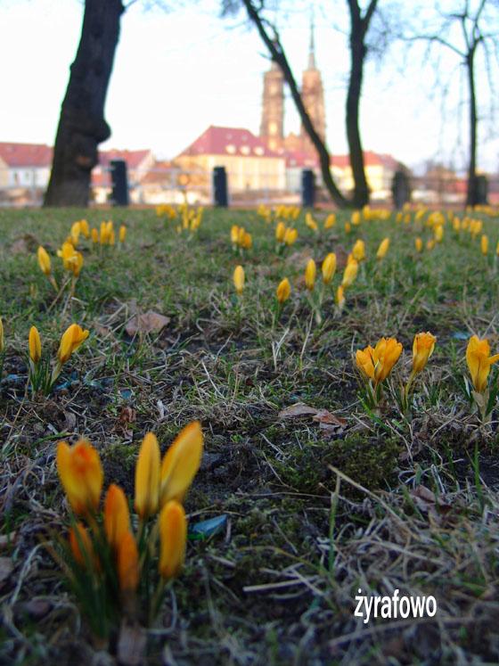 wiosna 2011_06