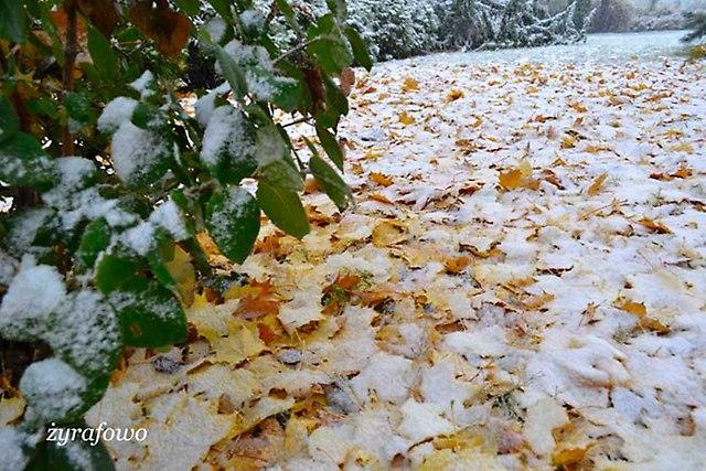 jesien 2012_195