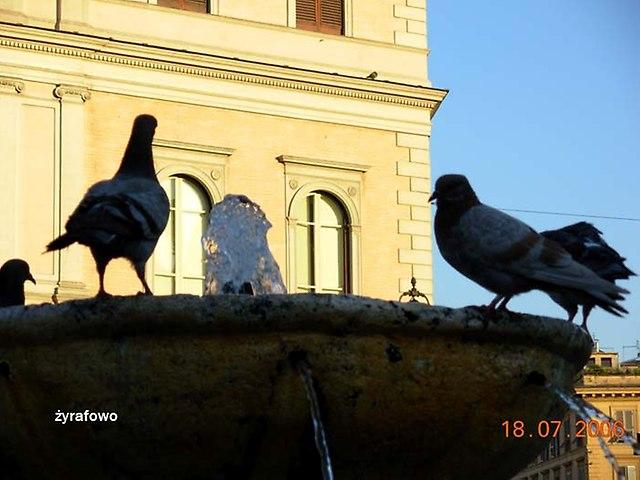 ptaki_30