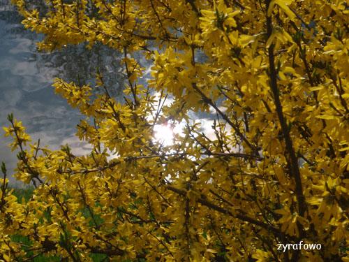 wiosna 2010_09
