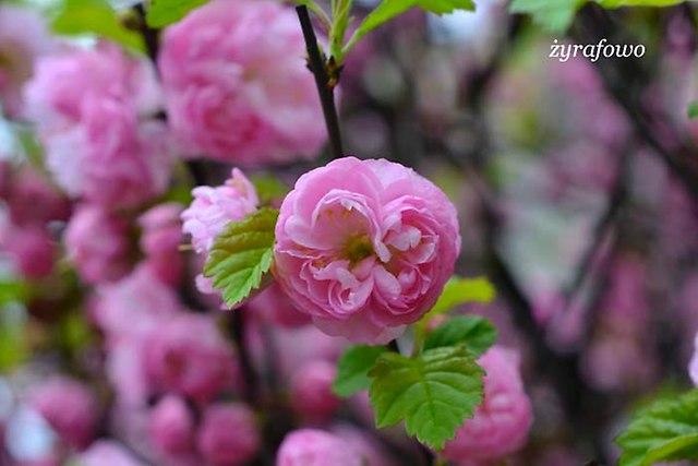 wiosna 2013_42