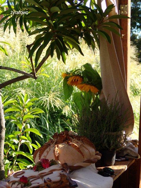 Ogrod Botaniczny 2011.08_09
