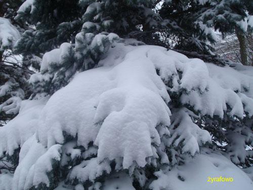 zima 2010_29