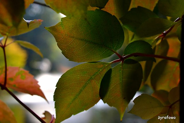 Ogrod Botaniczny 2014_11