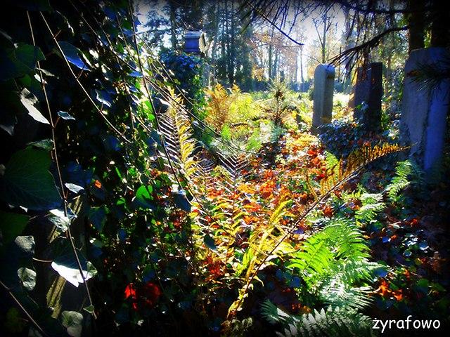 Cmentarz Zydowski_36
