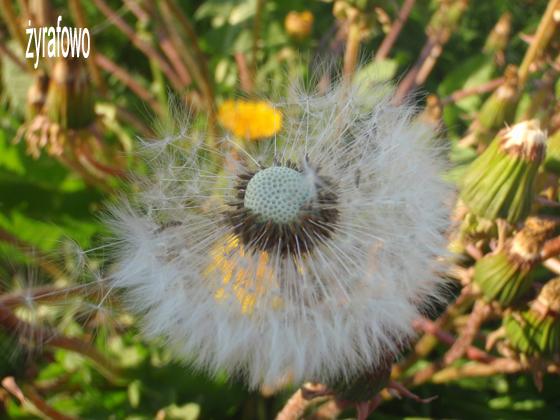 wiosna 2011_93