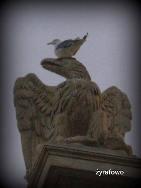 ptaki_41