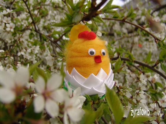kurczak 2011_16