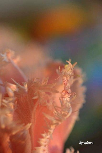 kwiaty 2014_07
