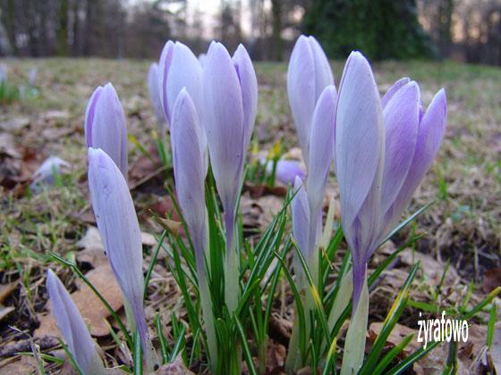 wiosna 2011_10